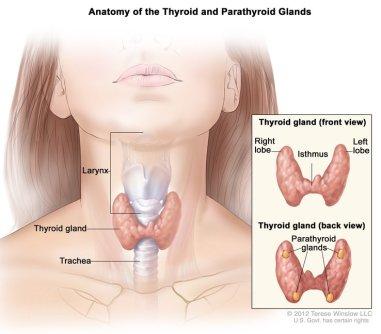 thyroid-disease-1